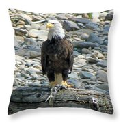 Bald Eagle With Fish On The St. Joe River Throw Pillow