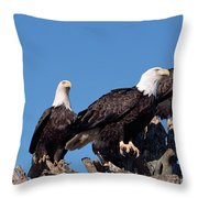 Bald Eagles Quartet Throw Pillow