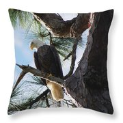 Bald Eagles Eye View Throw Pillow