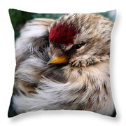 Ball Of Feathers Throw Pillow