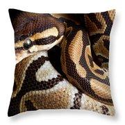 Ball Python Python Regius Throw Pillow