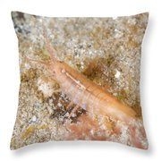 Baltic Isopod Throw Pillow