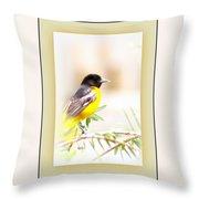 Baltimore Oriole 4348-11 - Bird Throw Pillow