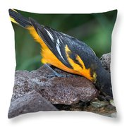 Baltimore Oriole Drinking Throw Pillow