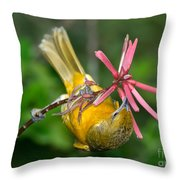 Baltimore Oriole Feeding On Coral Bean Throw Pillow