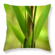 Bamboo Branches Emerge Throw Pillow