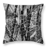 Bamboo-waimea Arboretum  Throw Pillow