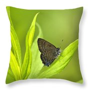 Banded Hairstreak Butterfly Resting On Green Leaf Throw Pillow