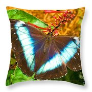 Banded Morpho Butterfly Throw Pillow