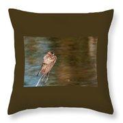 Bank Swallow Resting Throw Pillow