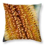 Banksia Flower Throw Pillow