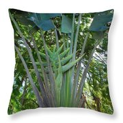 Bannana Palm Throw Pillow