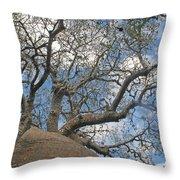 baobab from Madagascar 9 Throw Pillow