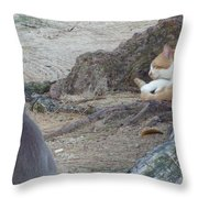 Barbados Cat Family Throw Pillow