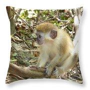 Barbados Green Monkey Throw Pillow