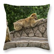 Barbary Macaques Throw Pillow