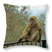 Barbary Macaque  Throw Pillow