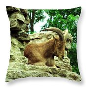 Barbary Sheep 2 Throw Pillow