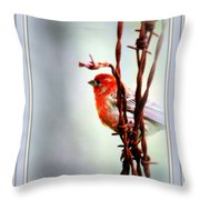 Barbed Wire And Finch Throw Pillow