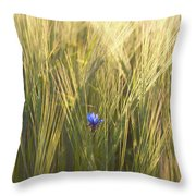 Barley And Corn Flowers In The Field Throw Pillow