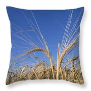 Barley Field Showing Heads Of Grain Throw Pillow