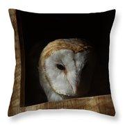 Barn Owl 5 Throw Pillow