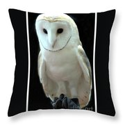 Barn Owl. Throw Pillow