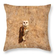 Barn Owl Perching Throw Pillow