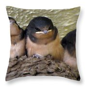 Barn Swallows 1 Throw Pillow