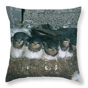 Barn Swallows Throw Pillow by Hans Reinhard
