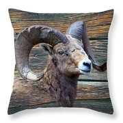 Barn Wood Bighorn Throw Pillow