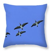 Barnacle Goose Flock Flying Throw Pillow