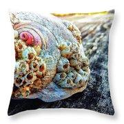 Barnacle Shell Throw Pillow