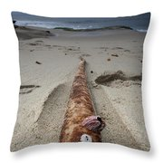 Barnacle Tales Throw Pillow