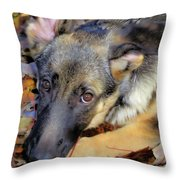 Baron In The Leaves Throw Pillow