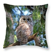 Barred Owl And Holly Throw Pillow