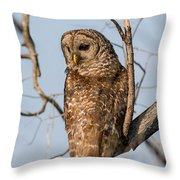 Barred Owl Okefenokee Swamp Georgia Throw Pillow
