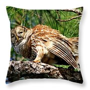 Barred Owl On Limb Throw Pillow