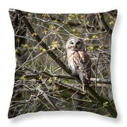 Barred Owl Square Throw Pillow