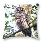 Barred Owl Staring Throw Pillow