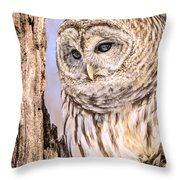 Barred Owl Watch Throw Pillow