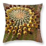 Barrel Cactus Bearing Fruit At El Mirador Rv Resort In San Carlos-sonora-mexico Throw Pillow