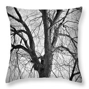 Barren Throw Pillow