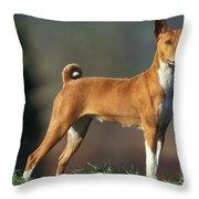 Basenji Dog Throw Pillow