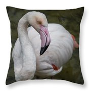 Bashful And Shy Flamingo. Throw Pillow