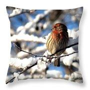 Basking In Winter Light Throw Pillow