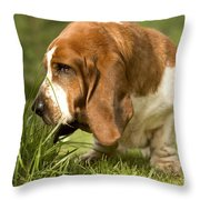 Basset Hound Sniffing Throw Pillow