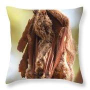 Sleeping Bat Throw Pillow