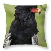 Bateleur 3 Throw Pillow