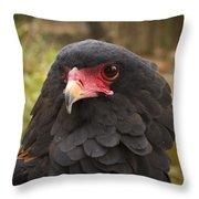 Bateleur Eagle Zimbabwe Throw Pillow